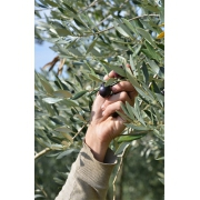 L'Huile d'olive est un anti-inflammatoire naturel