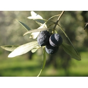 La Tanche : une perle noire au goût d'exception